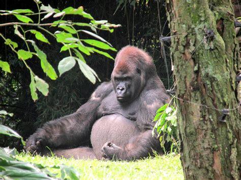 Imagenes De Animales Del Zoologico | zoologico de chapultepec animales www pixshark com