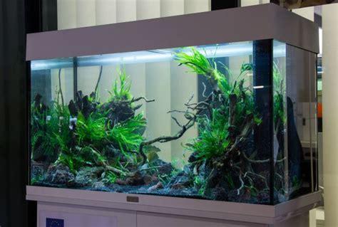Aquarium Ohne Pflanzen Einrichten 6848 by Aquarien Mit Oder Ohne Abdeckung Aquascaping Wiki