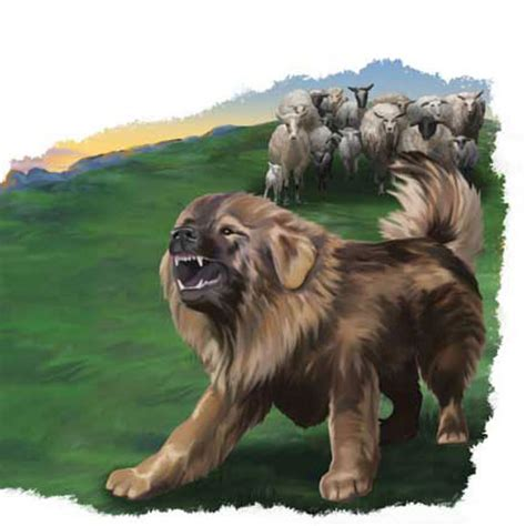 livestock guardian dogs solve your predator problems with livestock guardian dogs donkeys llamas and more