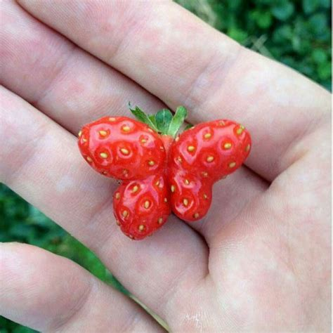 strawberry face shaped if you have a thing for weird shaped vegetables it s a