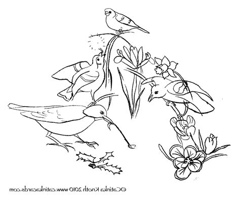 printable coloring pages birds and flowers flowers birds colouring pages 491325 171 coloring pages for