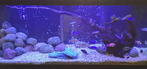 fish tank bench 100 cichlid forum u2022 aquascaping with 100 fish