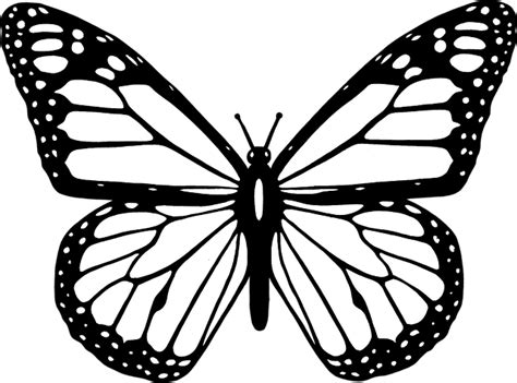 butterfly pattern png free vector graphic animal black butterfly flight