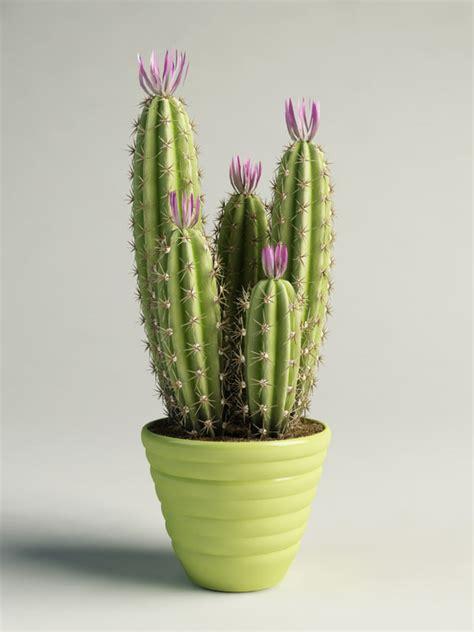 cactus pots flowering cactus pot max