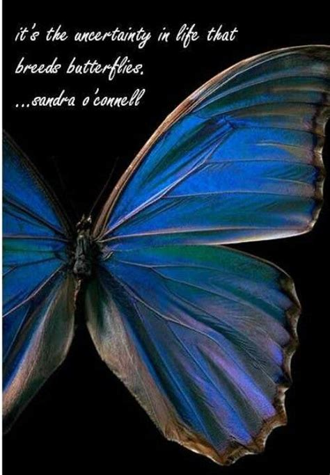 1410 Ble Bc Food butterfly quote quotes and sayings
