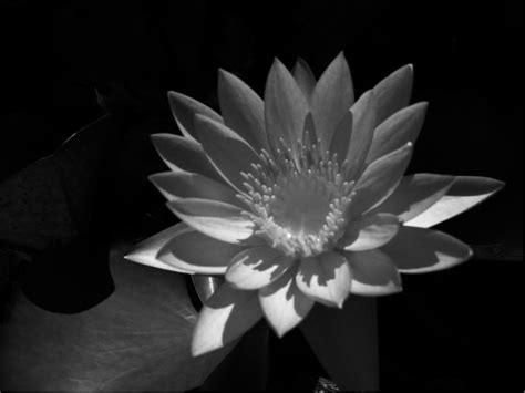 imagenes de flores grises blanco y negro ruth racionero redondo