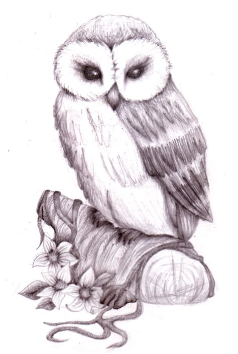 pencil sketch drawing images owl pencil sketch by natzs101 on deviantart