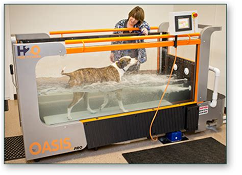water therapy for dogs underwater treadmill therapy pet acupuncture nc
