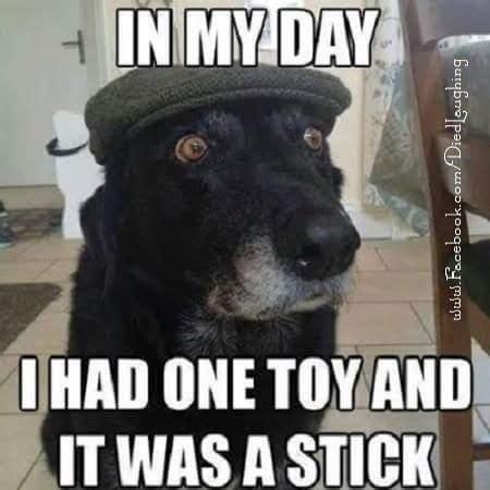 Gay Dog Meme - the 25 best funny dog memes ideas on pinterest smiling