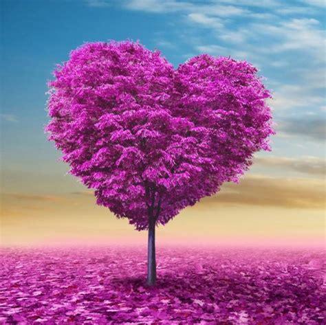 purple tree purple shaped tree purple picture