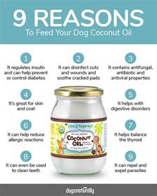 coconut oil for dogs our 3 favorite recipes