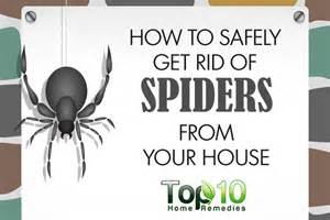 how to get rid of spiders home remedies how to safely get rid of spiders from your house top 10