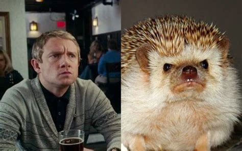 Cumberbatch Otter Meme - how to carve roast unicorn dr john watson hedgehog