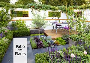 plant and patio how to decorate your patio with plants