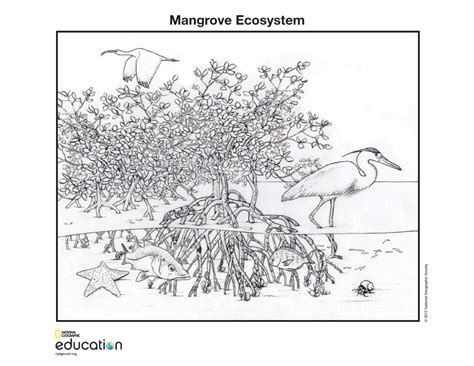 mangrove tree coloring page bangladesh braces for oil spill impact nat geo education