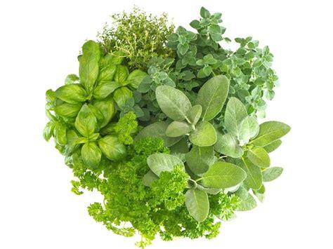 Vege Herbal Fillers Thrillers And Spillers Lavenders Longshot