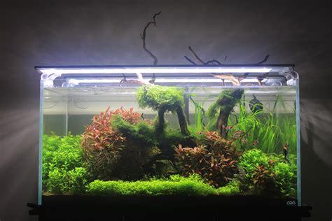 ada aquascape nature s reach ada 90p aquascape plantedtank