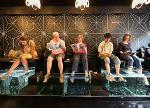 what is fish spa therapy health benefits of fish spa