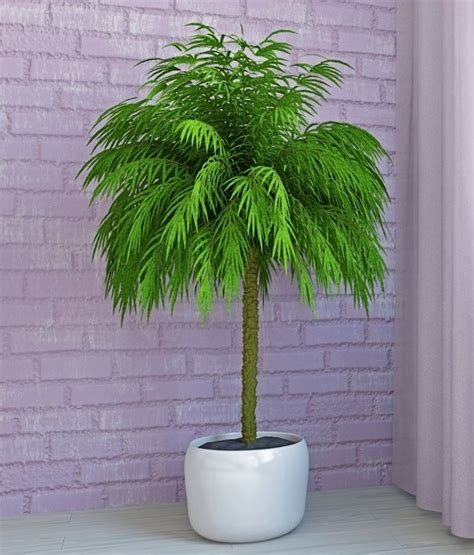 best indoor tree 25 best ideas about indoor palm trees on pinterest big