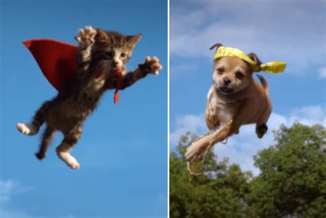 kittens vs puppies flying kittens vs flying puppies things