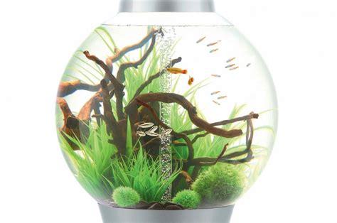 aquarium design sans entretien des aquariums design faciles d entretien m 233 lissa