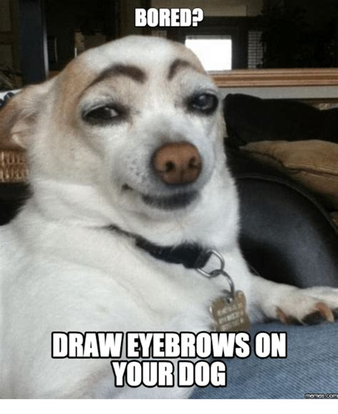 The Dog Meme - 25 best memes about eyebrows on dog eyebrows on dog memes
