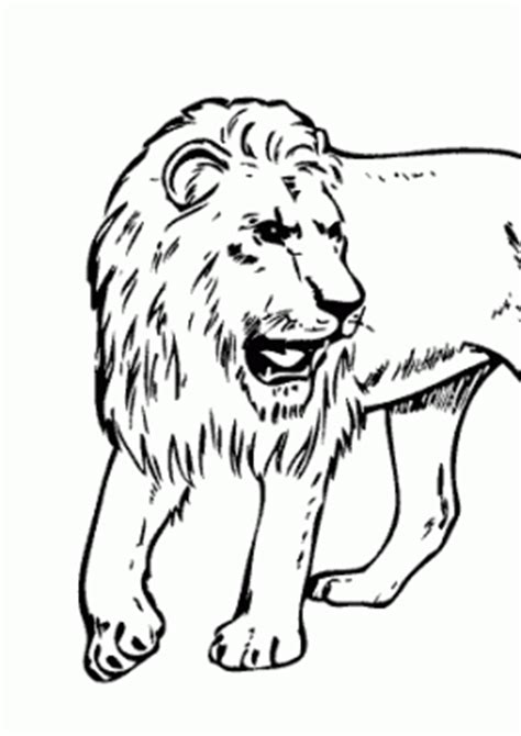real lion coloring pages pin real lions colouring pages on pinterest