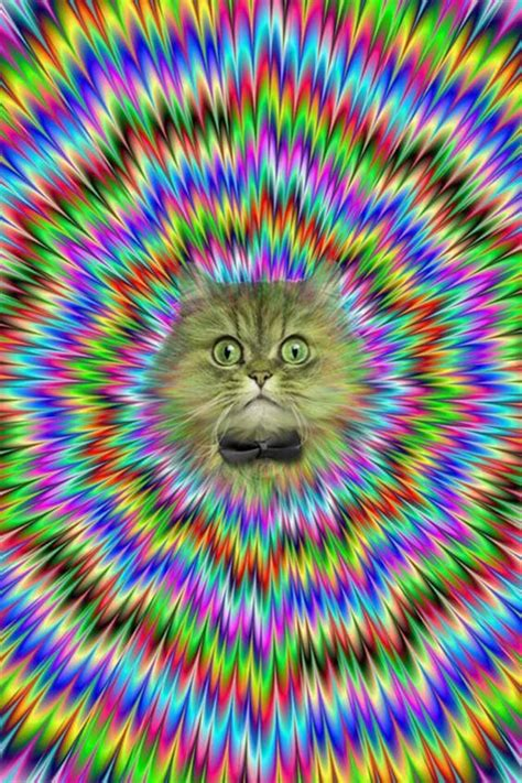 Cat Resistant Wallpaper | crazy cat wallpaper optical illusion or proof that cats