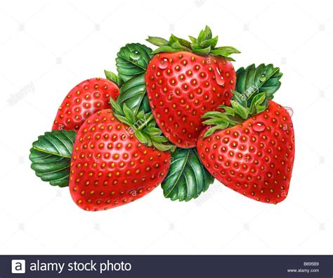 Strawberries Stock Images Image strawberry bunch stock photo royalty free image 21100109 alamy