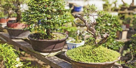 tips usaha budidaya tanaman hias peluang usaha
