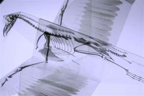 Skeleton Origami - spooky skeletal papercraft skeletal origami