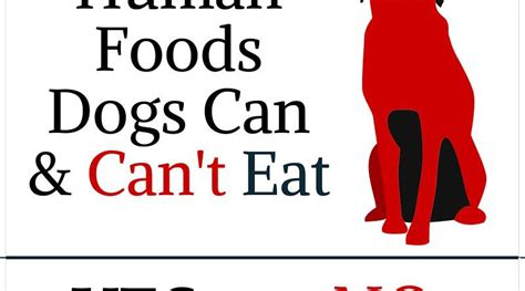 dogs can t eat human foods dogs can can t eat fallinpets