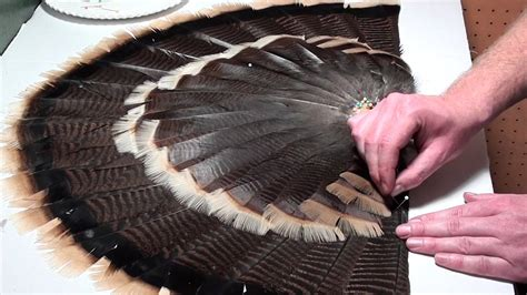 how to mount a turkey fan how to mount a turkey tail fan and beard 3 of 3 youtube