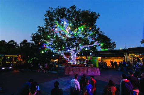 Things To Do In San Diego For Christmas 2017 Fine Zoo Lights San Diego