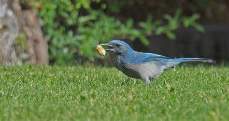 backyard birds utah utah birders birding blog utah birds utah birding