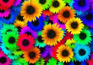 sunflower colors free pictures abstract 1504 images found