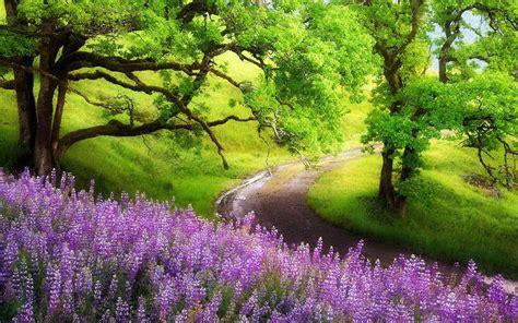 co d fiori flower landscape wallpaper wallpapersafari