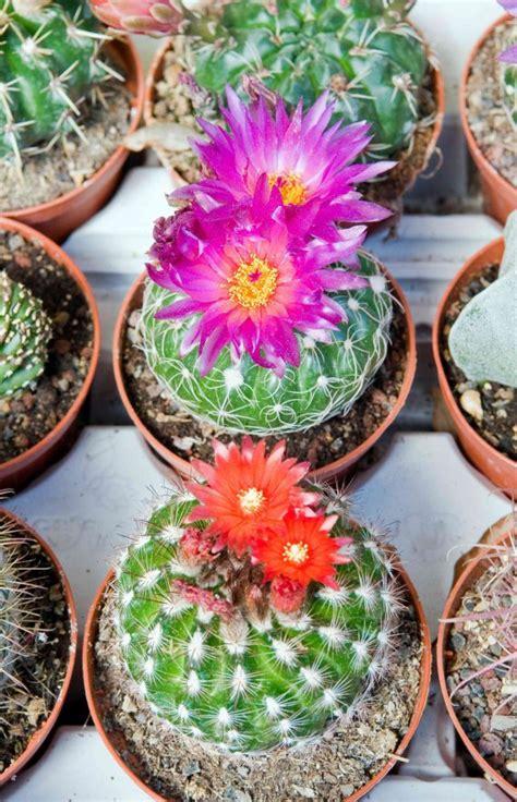 nomi di piante e fiori nomi di piante piante grasse nomi e foto