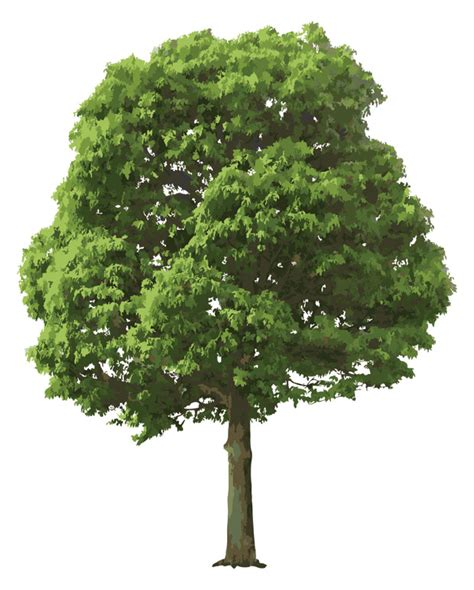 image of tree realistic tree vector ai svg eps vector free
