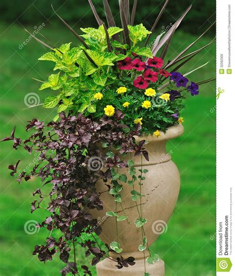 blattpflanzen garten container gardening stock photo image 32392300