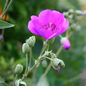 southern california gardening perennials that please