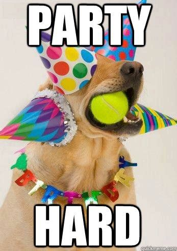 Puppy Birthday Meme - happy birthday wanderer sea green zines
