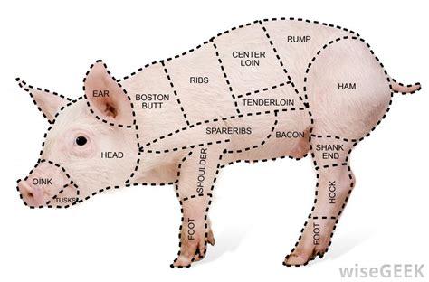 pork cuts diagram pork cuts of diagram car interior design