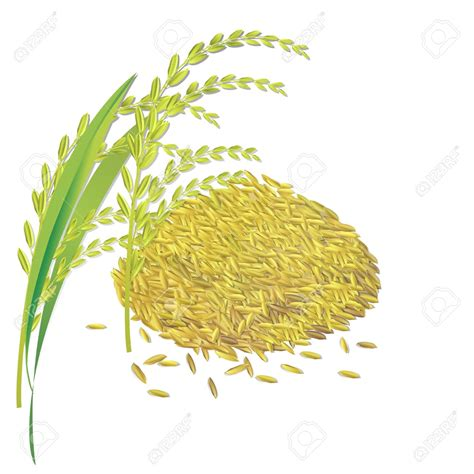 3 benefits of consuming whole grains single clipart rice grain pencil and in color single