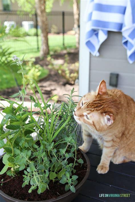 diy cat herb garden gardening cat plants cat garden