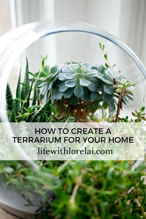 how to create a terrarium for your home life with lorelai