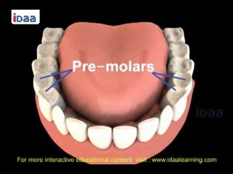what of models are there teeth structure for in science parts 3d
