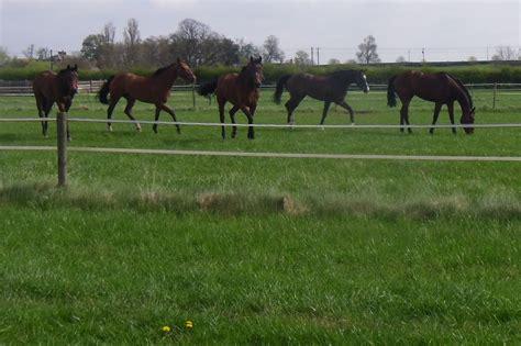 horse in backyard the yard edwin tuer racing