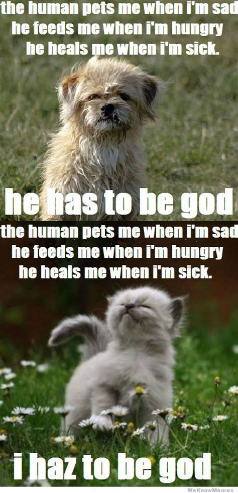 Dog Logic Meme - dog logic vs cat logic laugh pinterest cats funny