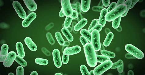 eubacteria classification project